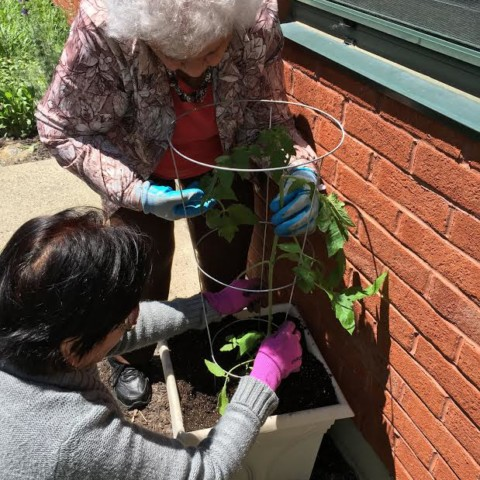 Great Job with those Tomatoes Garden Club!