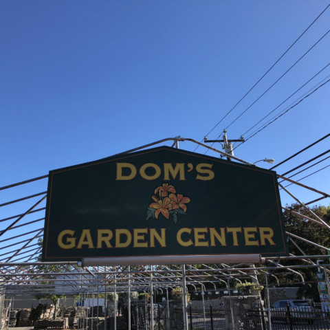 Dom's Garden Center! Thank you for donating to the Mayor's Fall Festival!